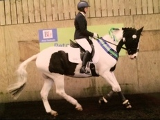 Dressage Competition Horse