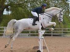 Broodmare - Beautiful BD and BS Sporthorse