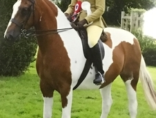 Reduced.  14.2. County level non native pony top class. PBA