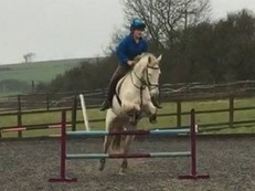 Perfect Pony Club/ Showjumper/ Eventer Potential