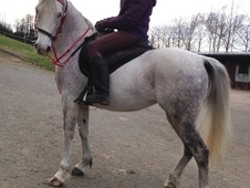 Arab Mare for companion/light hack