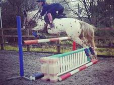 Talented 14. 2hh 7yr old Gelding 72%+ Novice Dressage Jumping 90c...