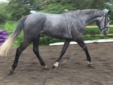 Potential Hunter Eventer