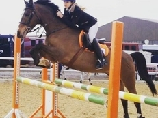 148cm showjumper , BS / BE prospect