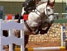 16. 2hh Super Riding Club/Mother-Daughter RID Share