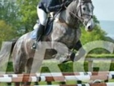 Super talented showjumping mare