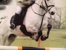 Genuine allrounder pony for sale