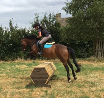 13.2hh New Forest X Jumping Pony, Oxfordshire