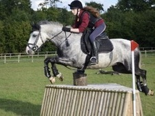 Pony looking for Experienced Rider