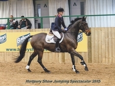 Outstanding top quality show jumper / event chateau de fleurie a ...