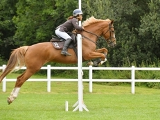 Talented competition horse