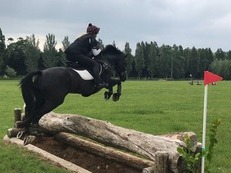 FANTASTIC LITTLE COMPETITION HORSE