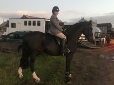 Eye Catching 17.1hh 6 year old gelding