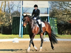 Sharer required for 16.2 Handsome Dressage Diva