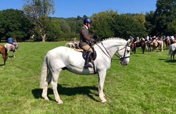 ** IMPRESSIVE TRADITIONAL IRISH HUNTER, 17.2hh **