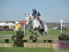 Lovely 16. 1hh 8yo Mare