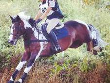 Super Smart Hunter/XC/SJ