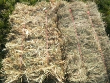 Small bale meadow hay and straw for sale