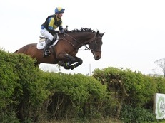 Super safe Irish Sports/ Event horse