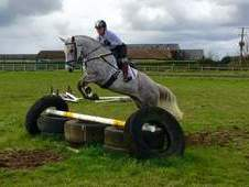 Connemara, Dapple grey, Mare, 6 years, 14. 3 hands