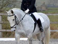 Dapple Grey Mare at bargain price, inc. wardrobe
