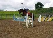 148cm Super scopey jumping/event pony