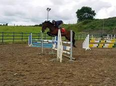 ***SOLD TO SWEDEN***148cm Super scopey jumping/event pony