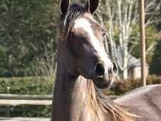 pretty 2 yr old filly