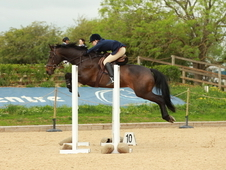 Talented SJ / WH / Dressage / Hunter