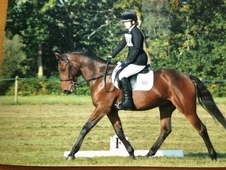15. 1hh All Rounder/Eventer