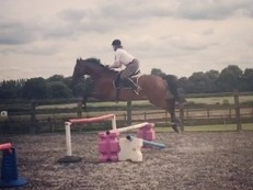 a talented 16:2hh alrounder/jumper