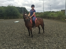 13hh competition pony