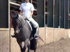 Rynn (Quick Silver)Connermara 14. 2 Pony for Sale