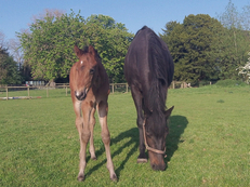 colt foal by Bazaars Exclusive