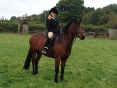 Fun 13HH Dartmoor X called Tinky!