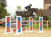 SUPER HORSE IDEAL FOR ANY RIDER WANTING TO GO SHOWJUMPING