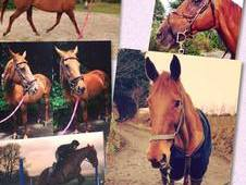 16. 3hh safe mare for part loan