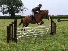 Sad Sale of FOX 14. 2hh 11yro Chestnut Mare