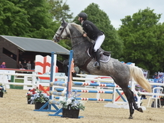 15.3hh Teenagers Dream Allrounder