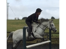 13.2hh Grey New Forest x mare.  Sad sale to 5* home.