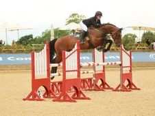 SUPER CAREFUL SCOPEY HORSE WITH A GREAT TRACK RECORD