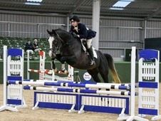 Quality young event horse