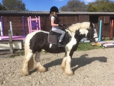 13. 3hh Steady cob mare