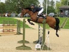 15.3hh 15 year old Bay mare Grade B showjumper by Vangelis S