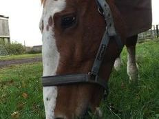 would like a sharer for my lovely 16 plus hands irish draft mare