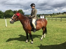 Welsh Pony - great first pony