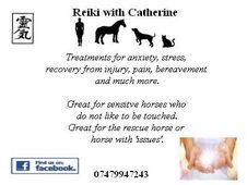 Reiki for horses and riders