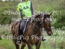 15. 2 Thoroughbred gelding 4 years old