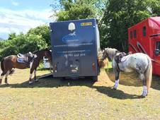 Massey equine transport- nationwide transport