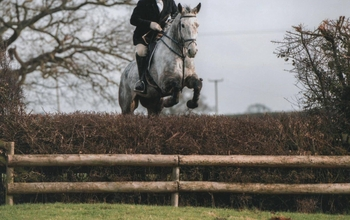 Smart 17hh Hunter/allrounder